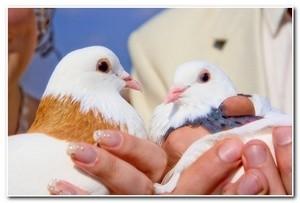 свадебные_голуби_svadebnye_golubi