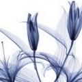Хью_Терви_и_его_рентгеновские_цветы_khyu_tervi_i_ego_rentgenovskie_cvety_18