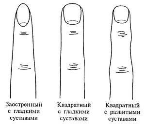 форма_пальцев_и_характер_forma_palcev_i_kharakter_4