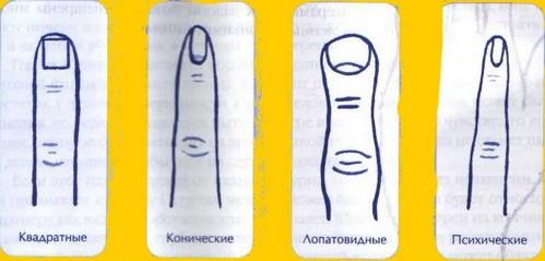 форма_пальцев_и_характер_forma_palcev_i_kharakter_5