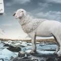 Одежда из овечьей шерсти