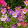 Цветы в семенах - что о них нужно знать